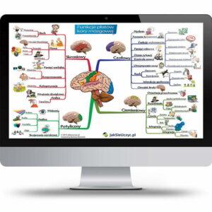 funkcje płatów kory mózgowej