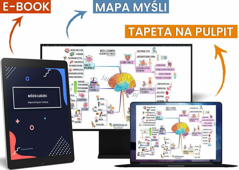 Mózg funkcje mapa myśli