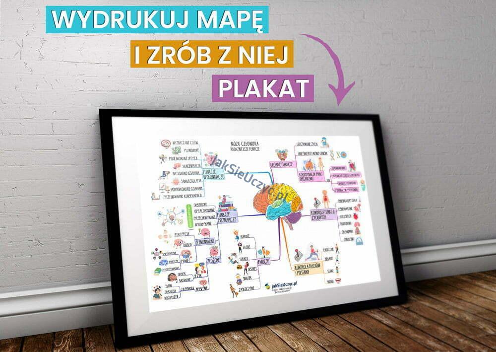 mózg funkcje plakat