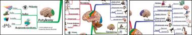 Funkcje płatów kory mózgowej człowieka