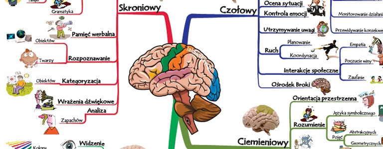 mózg funkcje